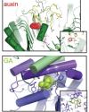Ubiquitin ligases in phytohormone signaling published in Plant Physiology